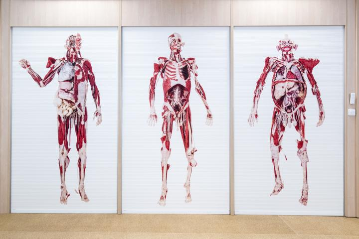 A New Laboratory Of Anatomical Models Is Available For Students Of